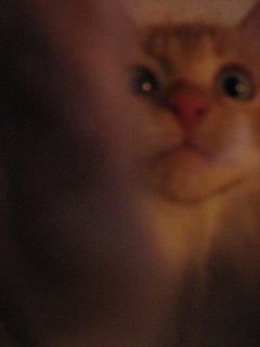 meow le chat
